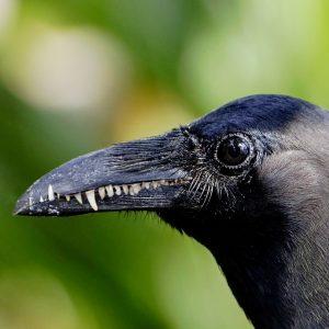 El Gabinete de curiosidades y monstruosidades – ¿Por qué las aves no tienen dientes y en cambio tienen pico?