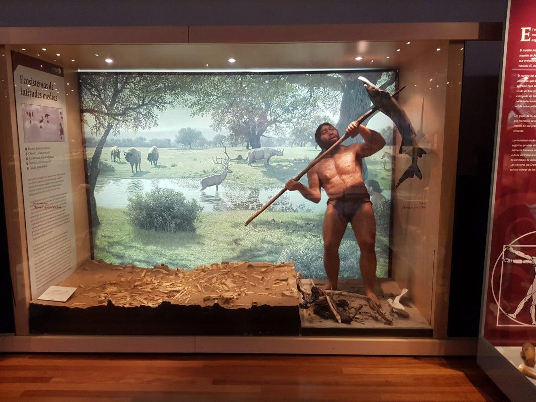 Este «Homo erectus» se parece a mi padre
